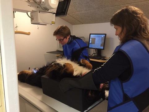 Dyrlægen hos Magtor tilbyder at tage røntgenbilleder