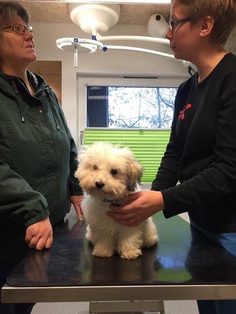 Vaccination af hund