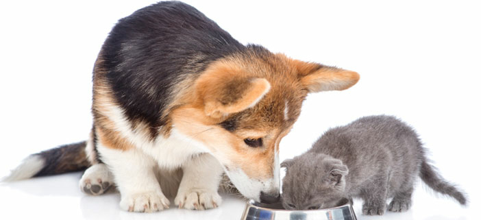 Magtor forhandler fortsat hunde mad og kattemad fra Acana og Orijen