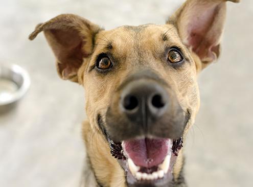 Glad hund foran madskål
