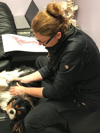 Praktisk undervisning under uddannelsen til hundemassør